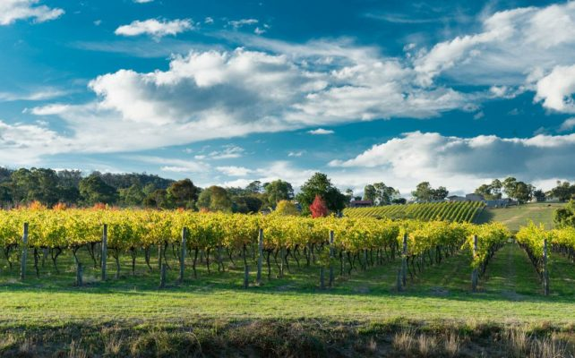 biggest wineries in australia